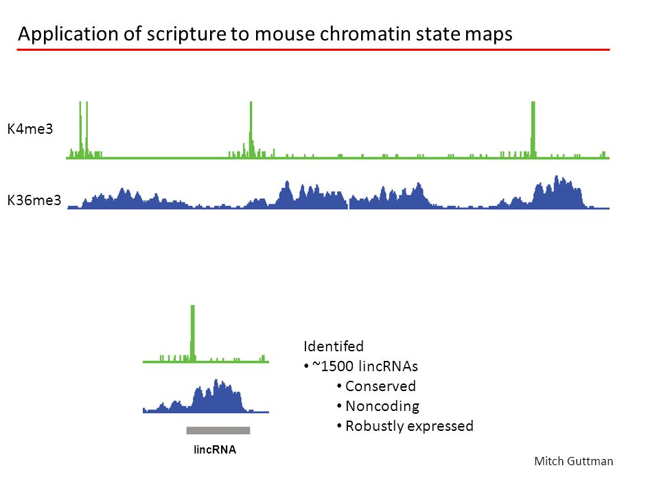 lincRNA K4me3 K36me3 Application of scripture to mouse chromatin state maps Identifed ~1500 lincRNAs Conserved Noncoding Robustly expressed lincRNA Mi