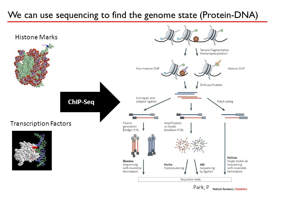 We can use sequencing to find the genome state (Protein-DNA) ChIP-Seq Histone Marks Transcription Factors Park, P