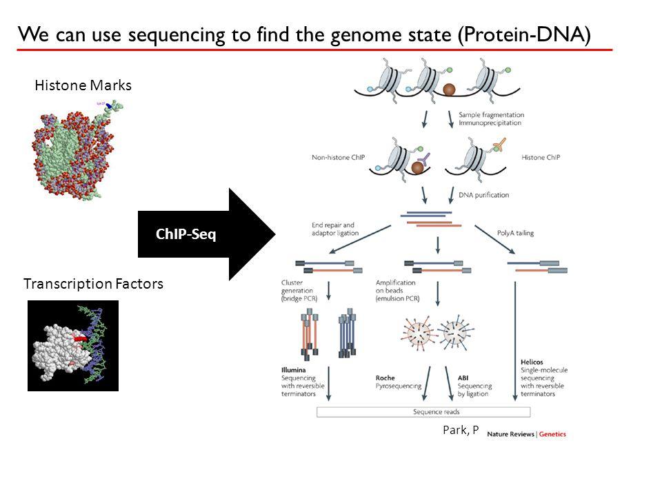 Tiny modification (TFs) Long modifications (K36/K27) Short modifications (K4) Discontinuous (RNA) Alignment Tiling arrays Scripture: Genomic jack of all trades…