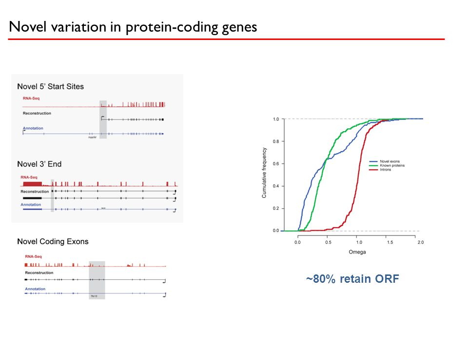 Novel variation in protein-coding genes ~80% retain ORF
