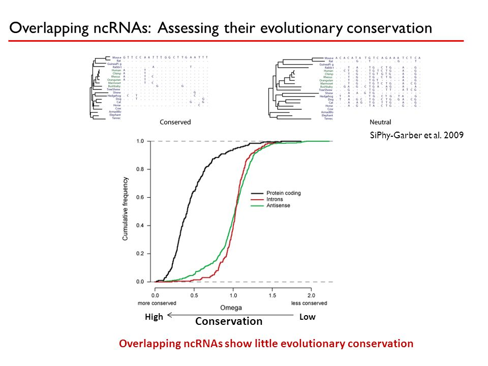 Overlapping ncRNAs: Assessing their evolutionary conservation SiPhy-Garber et al. 2009 Conservation HighLow Overlapping ncRNAs show little evolutionar