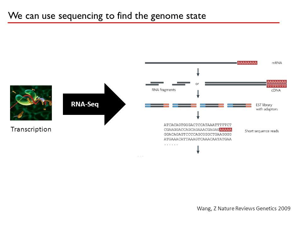 The genome is big: A lot happens by chance So we want to compute a multiple hypothesis correction Expected ~150,000,000 bases