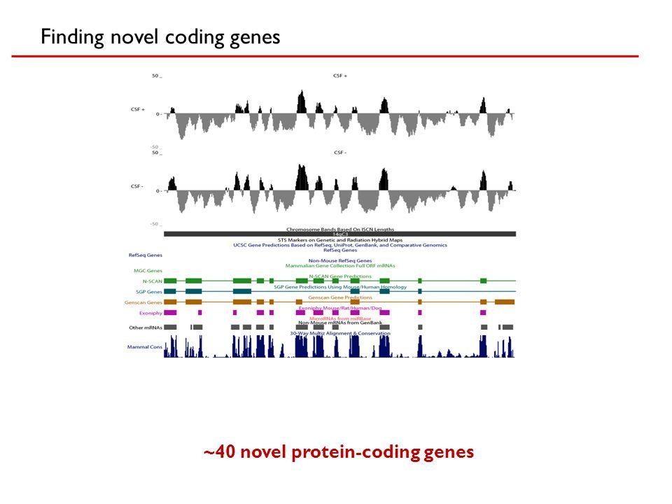 Finding novel coding genes ~40 novel protein-coding genes