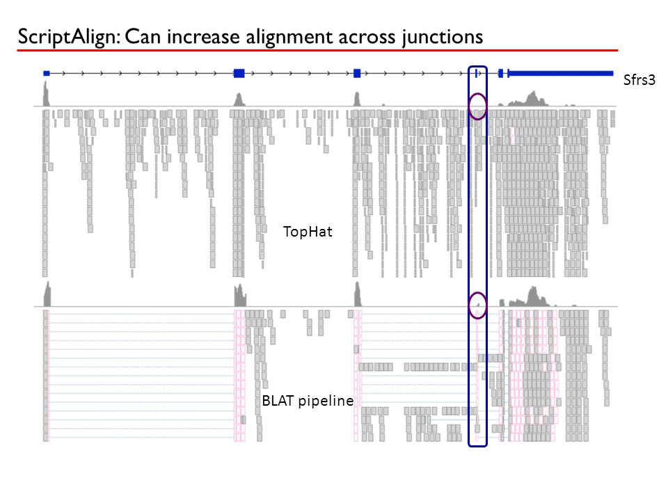 Sfrs3 TopHat BLAT pipeline ` ScriptAlign: Can increase alignment across junctions