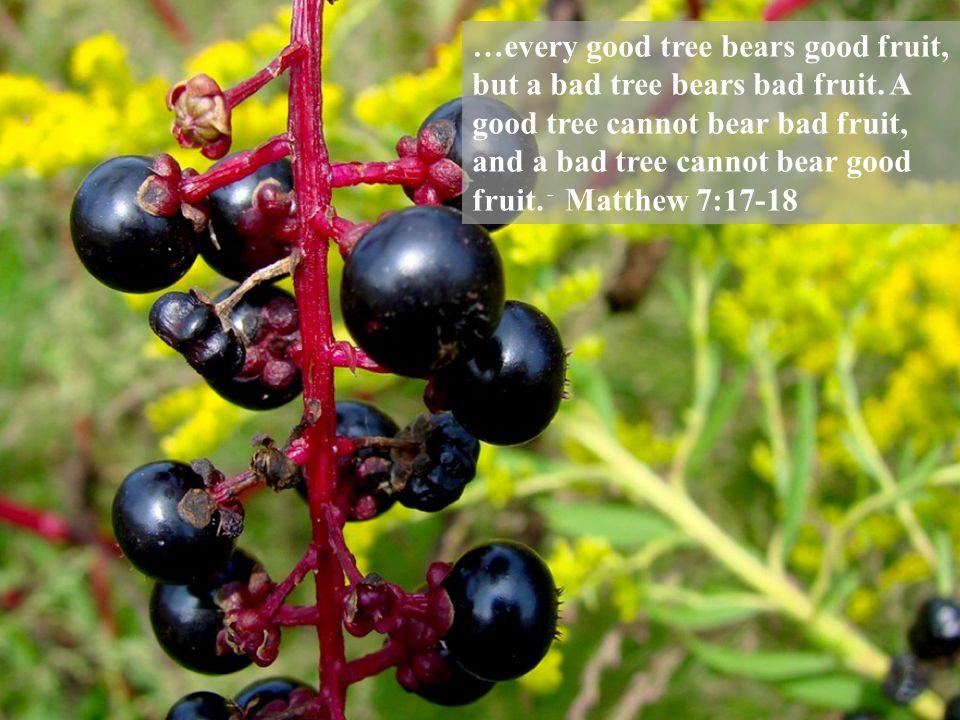 …every good tree bears good fruit, but a bad tree bears bad fruit.