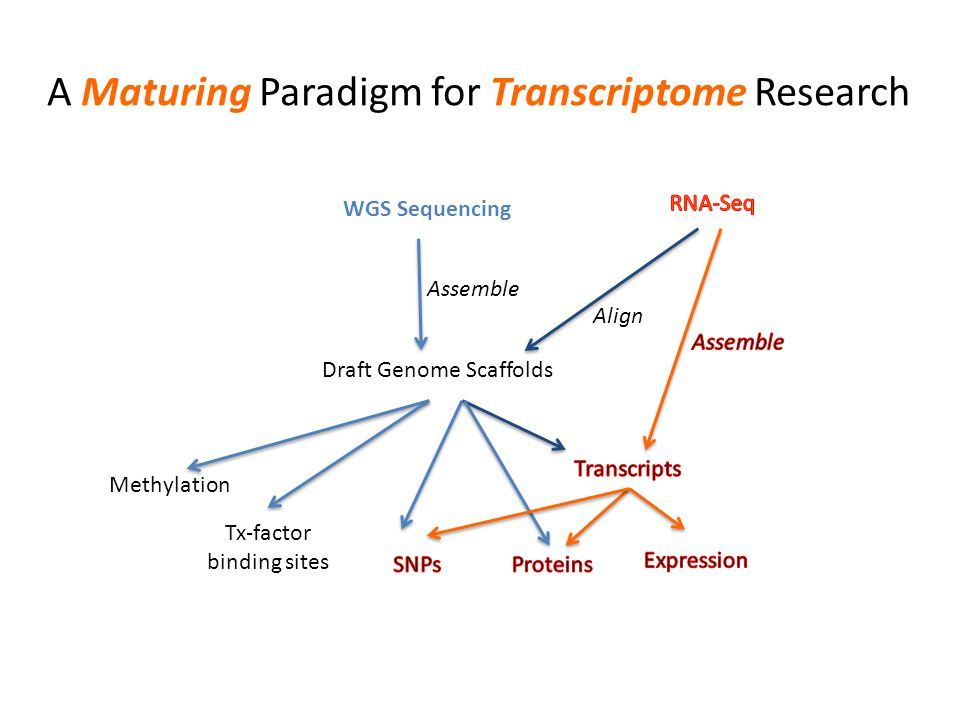 A Maturing Paradigm for Transcriptome Research WGS Sequencing Assemble Draft Genome Scaffolds Methylation Tx-factor binding sites Align
