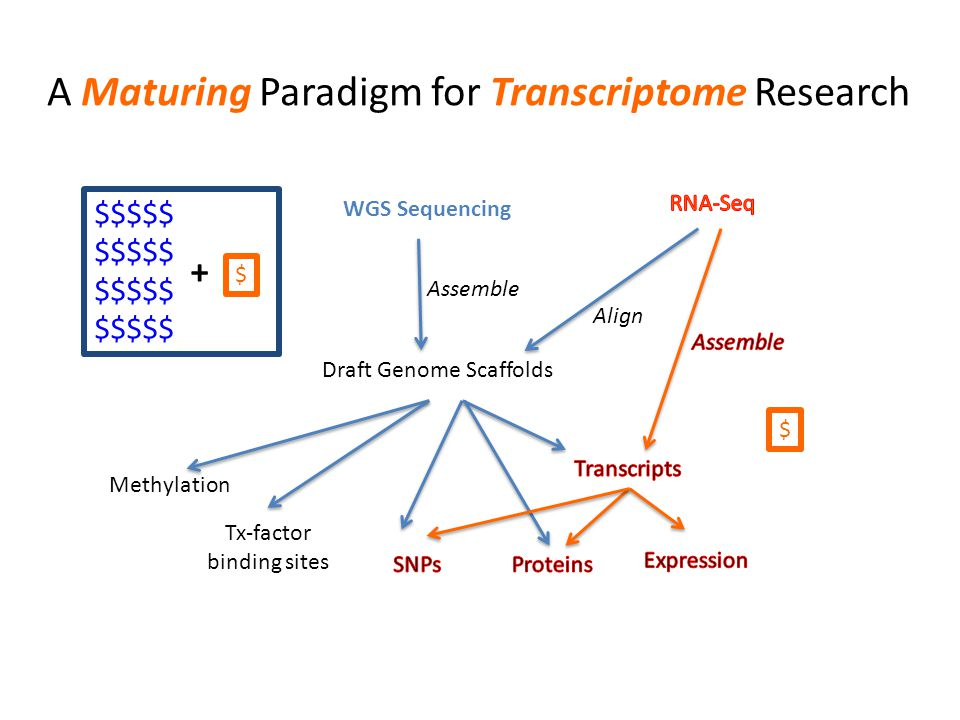 A Maturing Paradigm for Transcriptome Research WGS Sequencing Assemble Draft Genome Scaffolds Methylation Tx-factor binding sites Align $$$$$ $ $ +