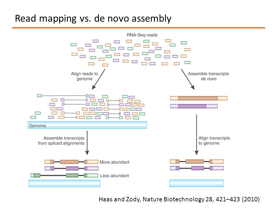 Read mapping vs. de novo assembly Haas and Zody, Nature Biotechnology 28, 421–423 (2010)