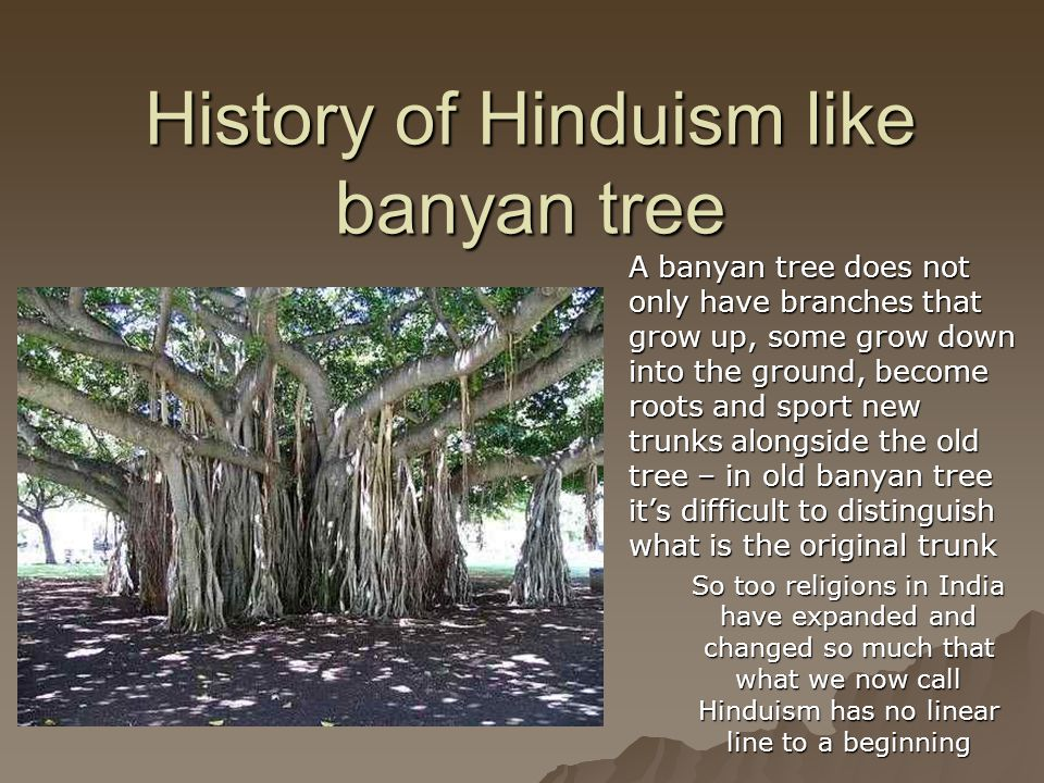 History of Hinduism like banyan tree A banyan tree does not only have branches that grow up, some grow down into the ground, become roots and sport ne