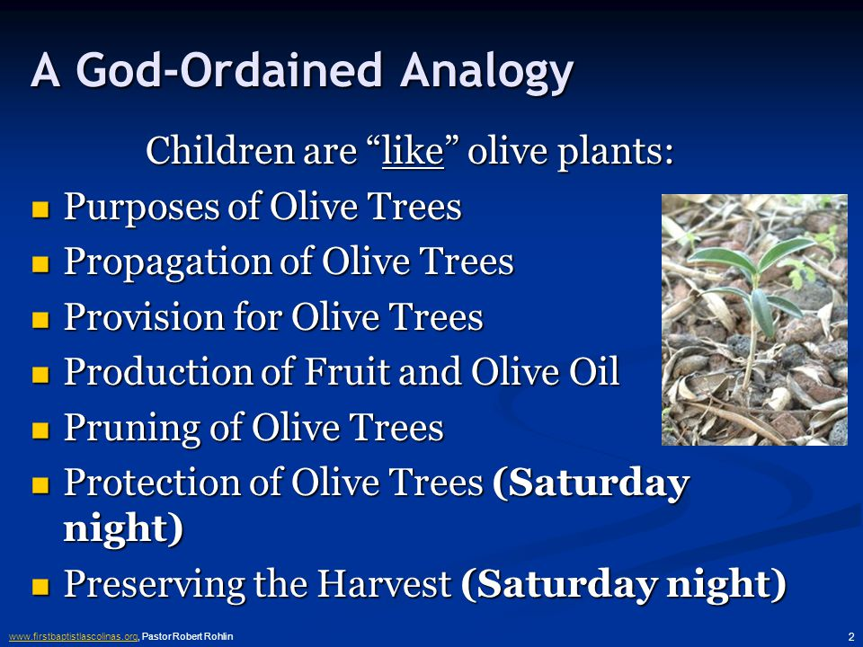 www.firstbaptistlascolinas.orgwww.firstbaptistlascolinas.org, Pastor Robert Rohlin 2 A God-Ordained Analogy Children are like olive plants: Purposes of Olive Trees Purposes of Olive Trees Propagation of Olive Trees Propagation of Olive Trees Provision for Olive Trees Provision for Olive Trees Production of Fruit and Olive Oil Production of Fruit and Olive Oil Pruning of Olive Trees Pruning of Olive Trees Protection of Olive Trees (Saturday night) Protection of Olive Trees (Saturday night) Preserving the Harvest (Saturday night) Preserving the Harvest (Saturday night)
