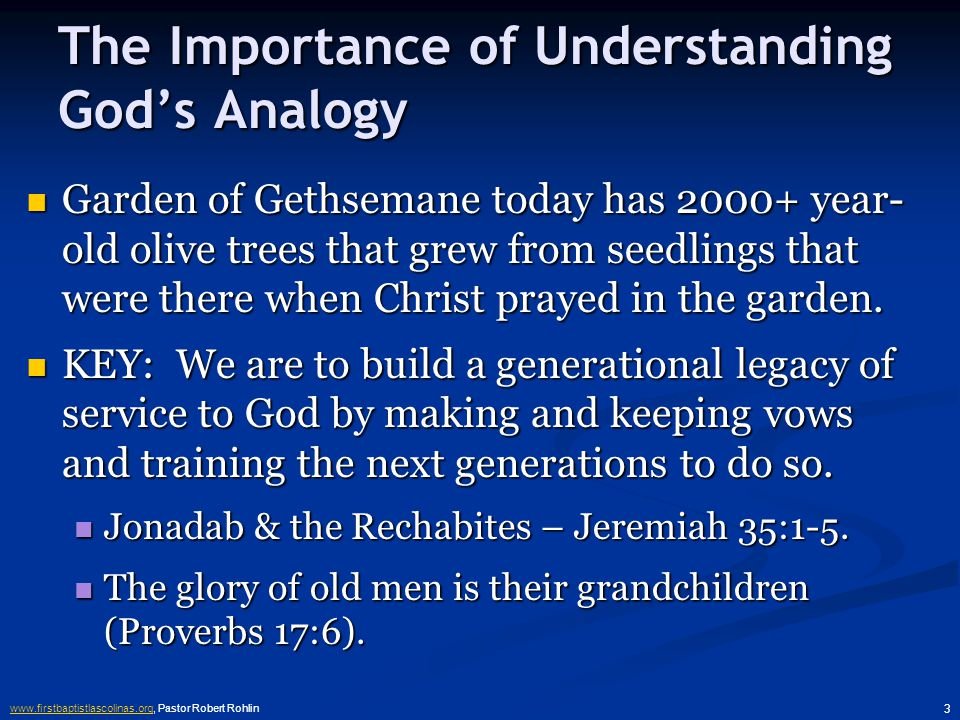 www.firstbaptistlascolinas.orgwww.firstbaptistlascolinas.org, Pastor Robert Rohlin 3 The Importance of Understanding God's Analogy Garden of Gethsemane today has 2000+ year- old olive trees that grew from seedlings that were there when Christ prayed in the garden.
