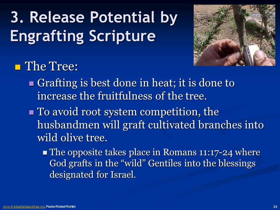 www.firstbaptistlascolinas.orgwww.firstbaptistlascolinas.org, Pastor Robert Rohlin 33 2.