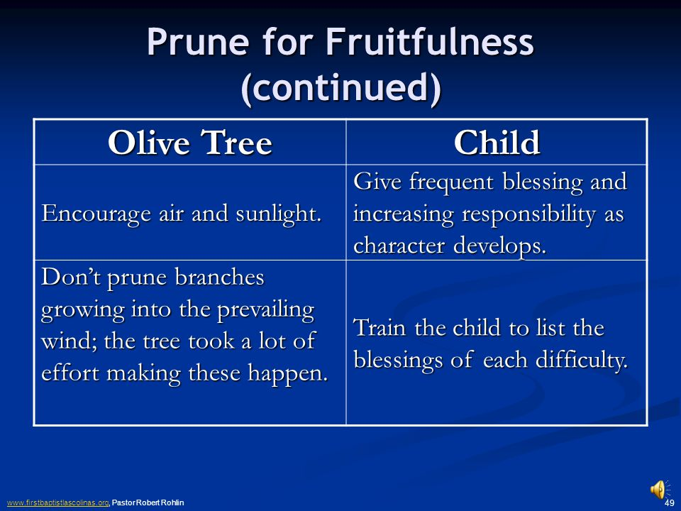 www.firstbaptistlascolinas.orgwww.firstbaptistlascolinas.org, Pastor Robert Rohlin 48 Prune for Fruitfulness Olive Tree Child Remove dead and diseased wood.