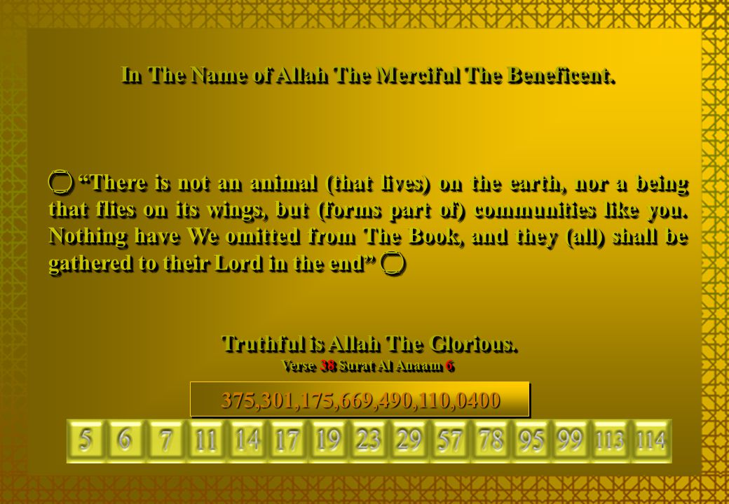 """In The Name of Allah The Merciful The Beneficent.  """"There is not an animal (that lives) on the earth, nor a being that flies on its wings, but (forms"""