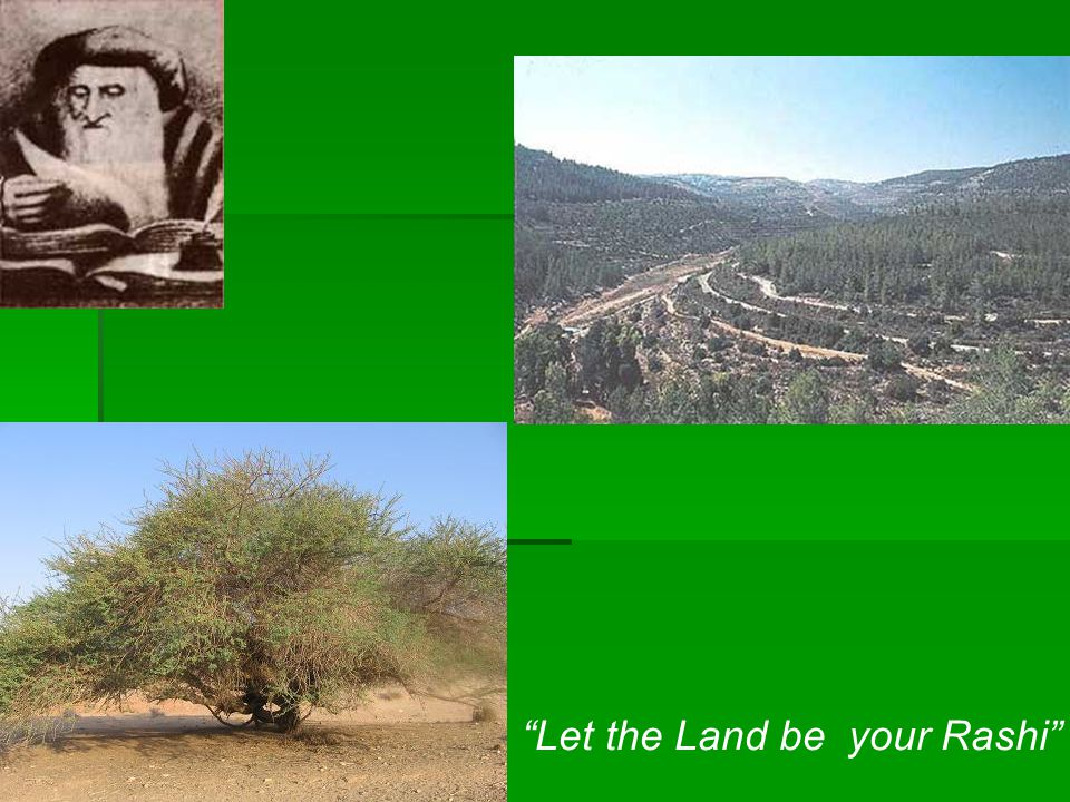 Let the Land be your Rashi