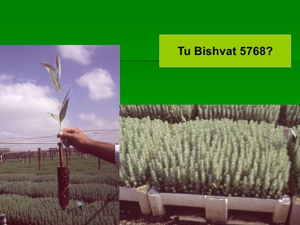 Tu Bishvat 5768?