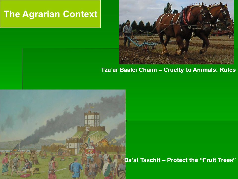 The Agrarian Context Tza'ar Baalei Chaim – Cruelty to Animals: Rules Ba'al Taschit – Protect the Fruit Trees