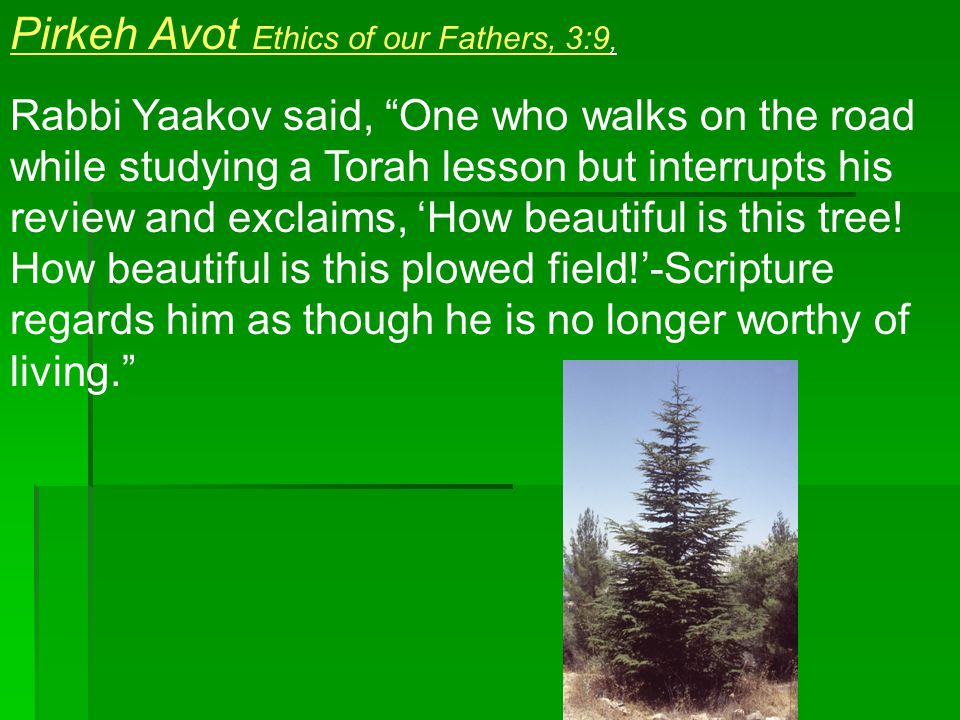 Pirkeh Avot Ethics of our Fathers, 3:9, Rabbi Yaakov said, One who walks on the road while studying a Torah lesson but interrupts his review and exclaims, 'How beautiful is this tree.