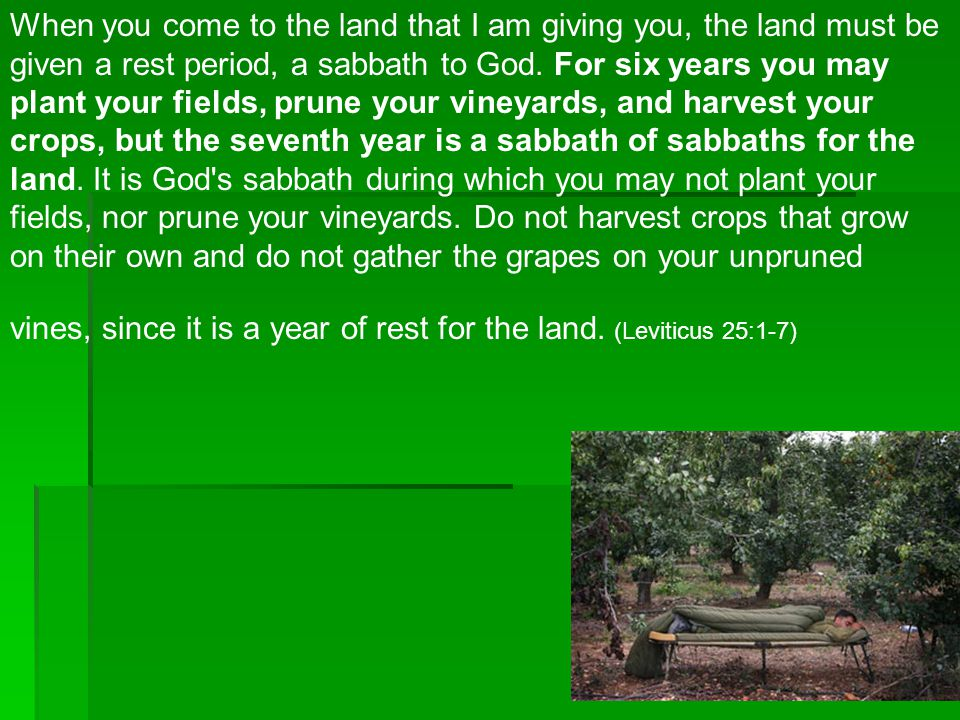 When you come to the land that I am giving you, the land must be given a rest period, a sabbath to God.