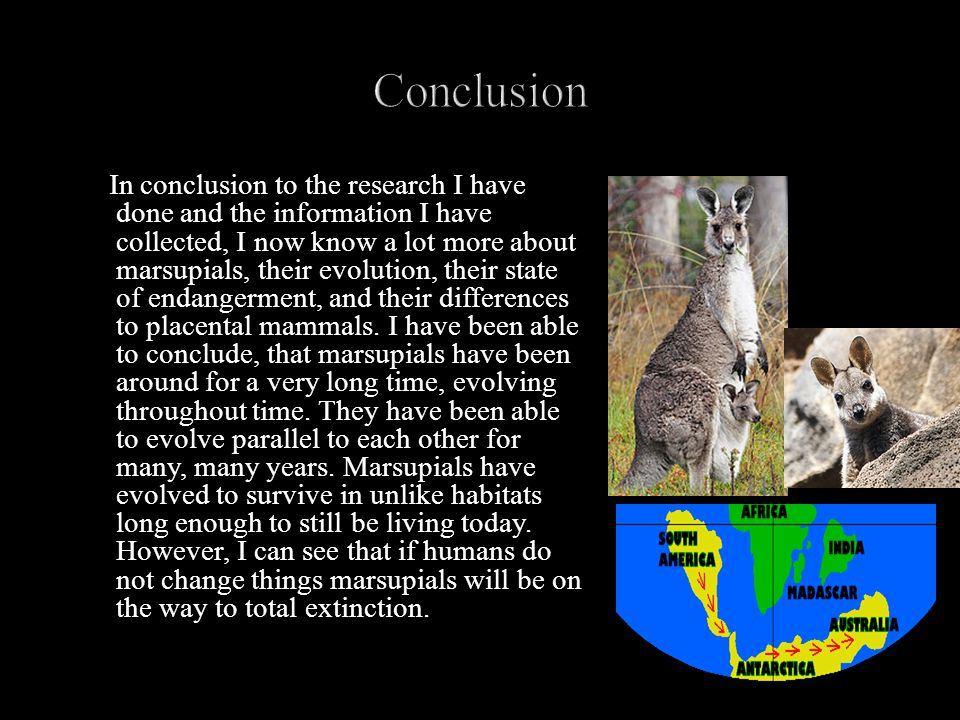 In conclusion to the research I have done and the information I have collected, I now know a lot more about marsupials, their evolution, their state of endangerment, and their differences to placental mammals.
