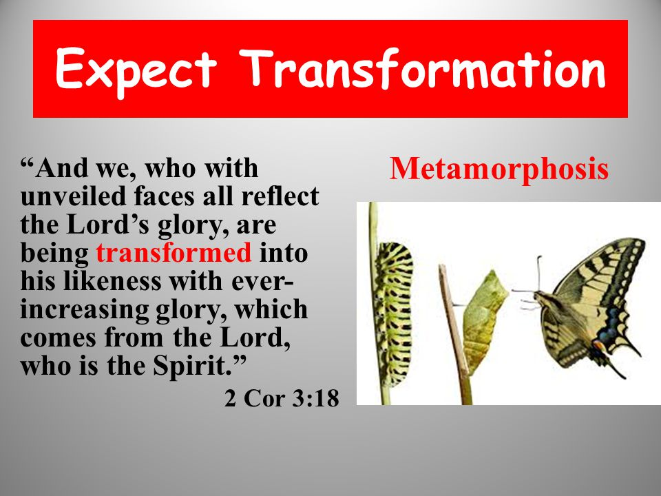 Expect Transformation And we, who with unveiled faces all reflect the Lord's glory, are being transformed into his likeness with ever- increasing glory, which comes from the Lord, who is the Spirit. 2 Cor 3:18 Metamorphosis