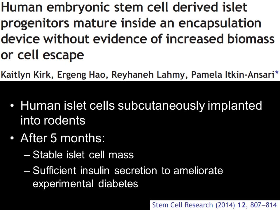 Human islet cells subcutaneously implanted into rodents After 5 months: –Stable islet cell mass –Sufficient insulin secretion to ameliorate experiment