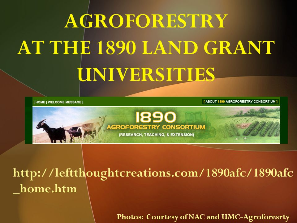 AGROFORESTRY AT THE 1890 LAND GRANT UNIVERSITIES http://leftthoughtcreations.com/1890afc/1890afc _home.htm Photos: Courtesy of NAC and UMC-Agroforesrty