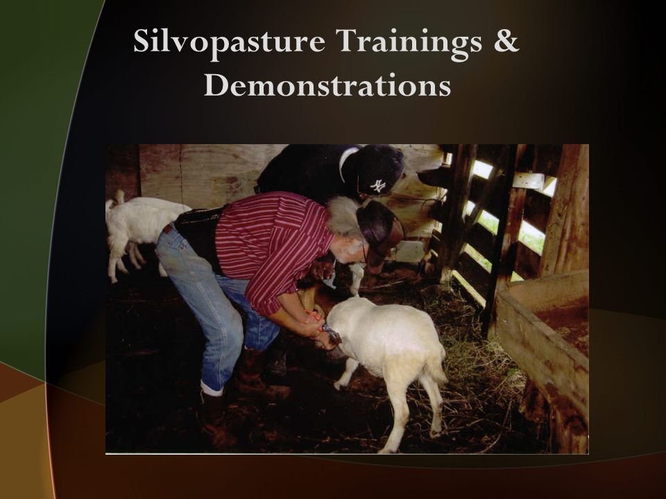 Silvopasture Trainings & Demonstrations