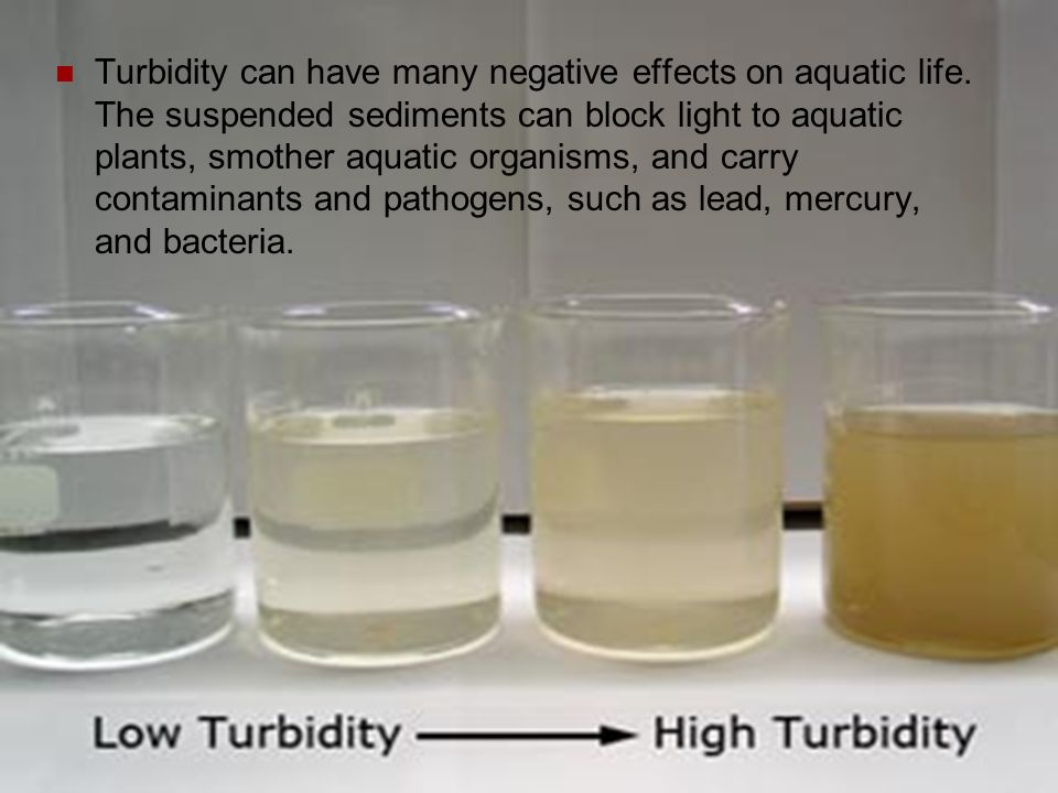 Turbidity can have many negative effects on aquatic life. The suspended sediments can block light to aquatic plants, smother aquatic organisms, and ca