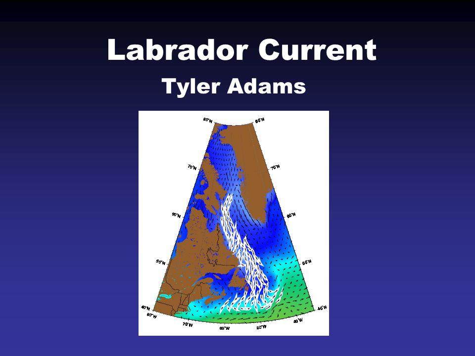 Labrador Current Tyler Adams
