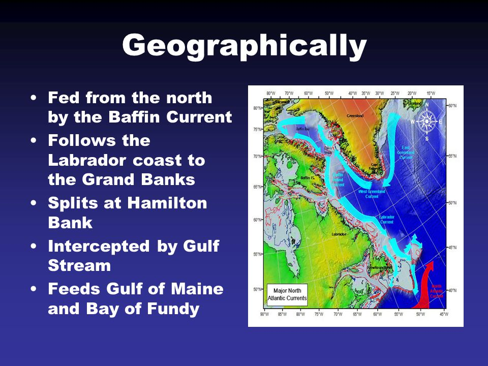 Geographically Fed from the north by the Baffin Current Follows the Labrador coast to the Grand Banks Splits at Hamilton Bank Intercepted by Gulf Stre