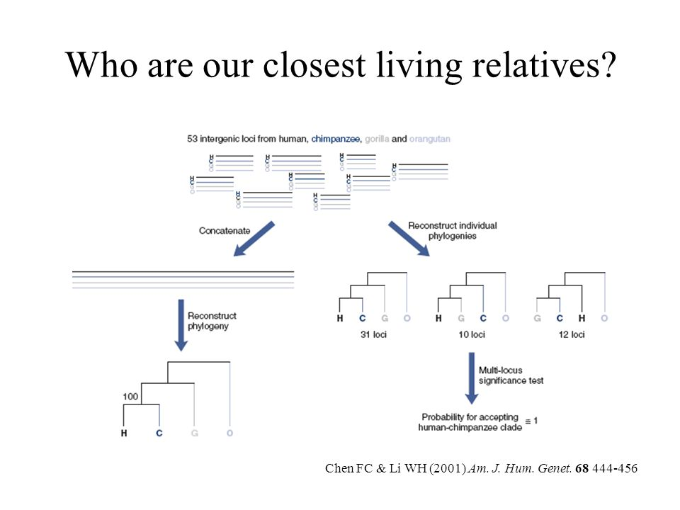 Phenotypic differences between humans and other apes Carroll (2003) Nature 422, 849-857
