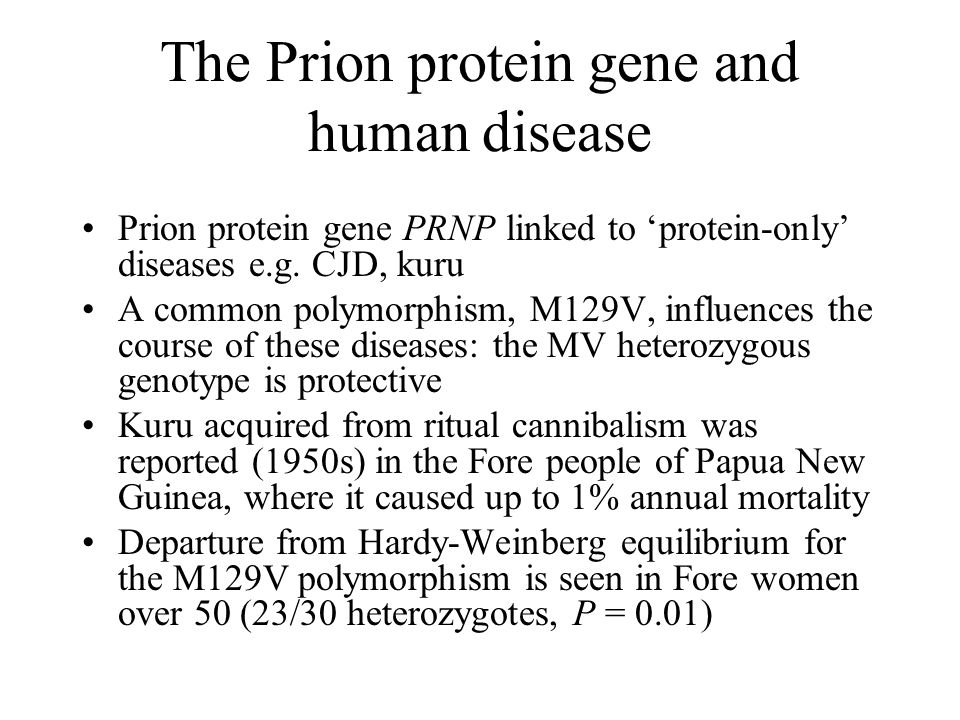 The Prion protein gene and human disease Prion protein gene PRNP linked to 'protein-only' diseases e.g. CJD, kuru A common polymorphism, M129V, influe