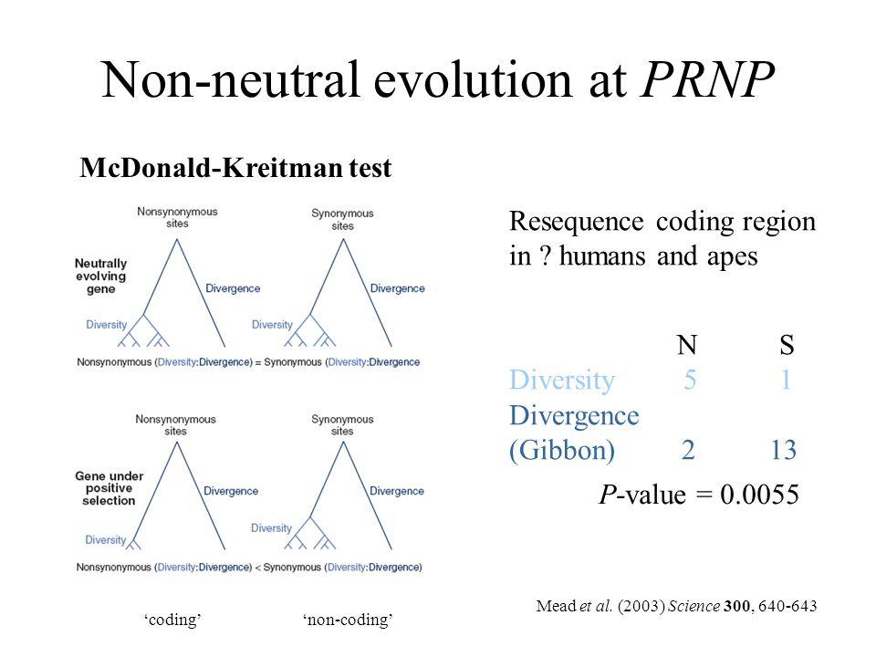 Non-neutral evolution at PRNP McDonald-Kreitman test N S Diversity 5 1 Divergence (Gibbon) 2 13 'coding''non-coding' P-value = 0.0055 Resequence codin