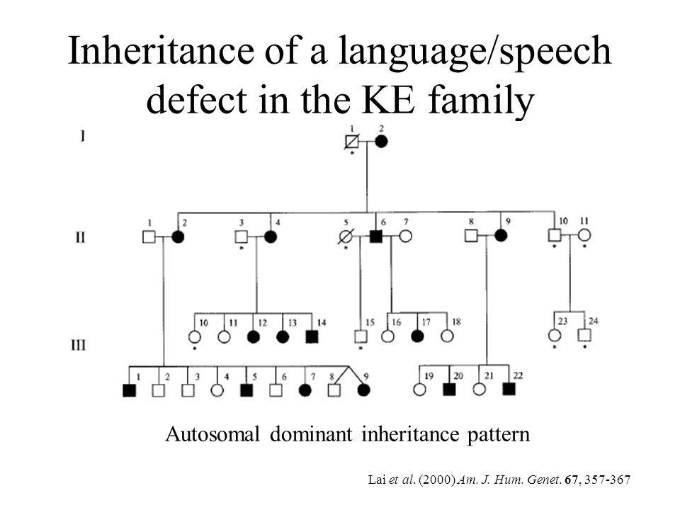 Inheritance of a language/speech defect in the KE family Lai et al. (2000) Am. J. Hum. Genet. 67, 357-367 Autosomal dominant inheritance pattern
