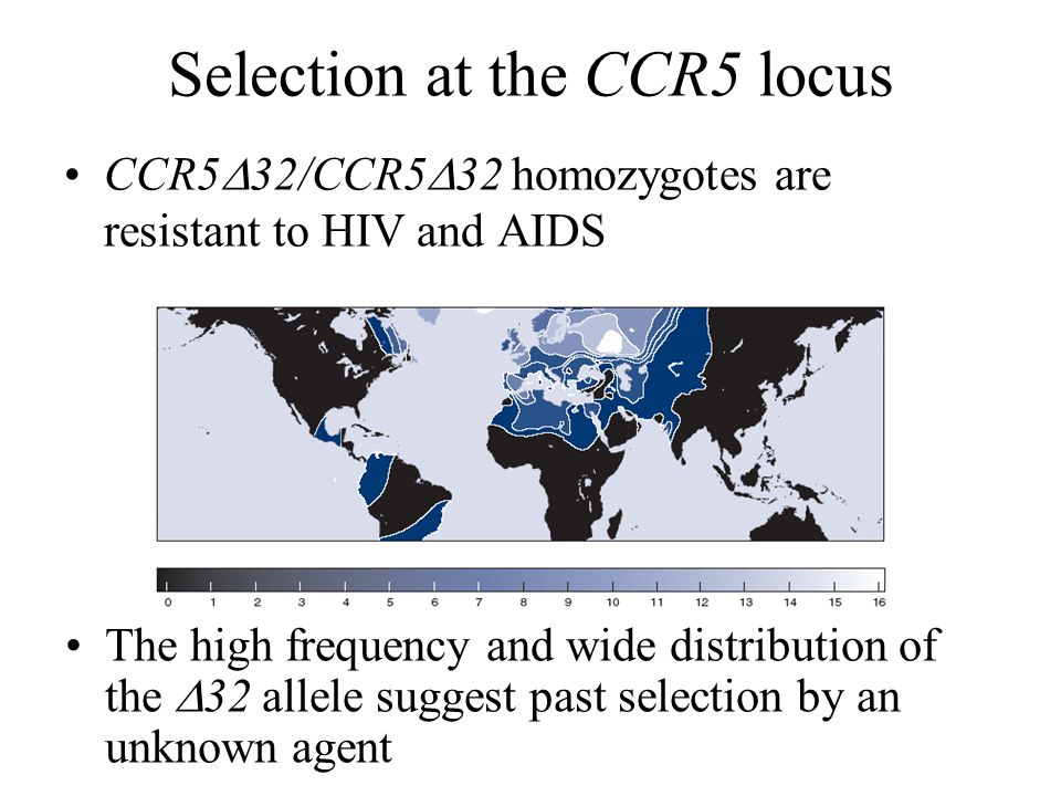 Selection at the CCR5 locus CCR5  32/CCR5  32 homozygotes are resistant to HIV and AIDS The high frequency and wide distribution of the  32 allele