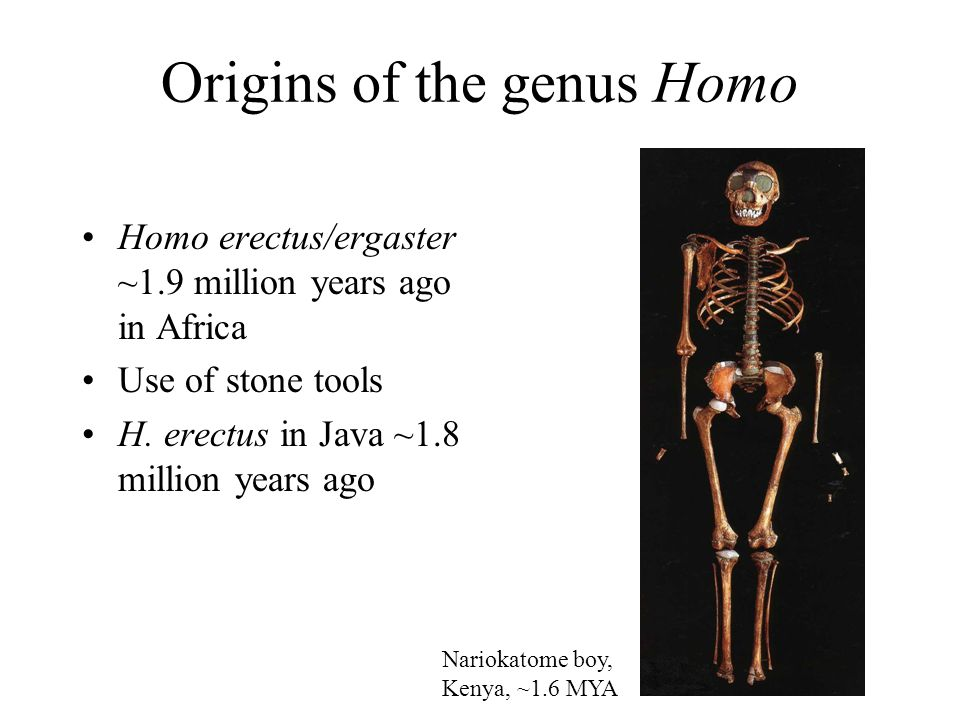 Modern human mtDNA is distinct from Neanderthal mtDNA Krings et al. (1997) Cell 90, 19-30