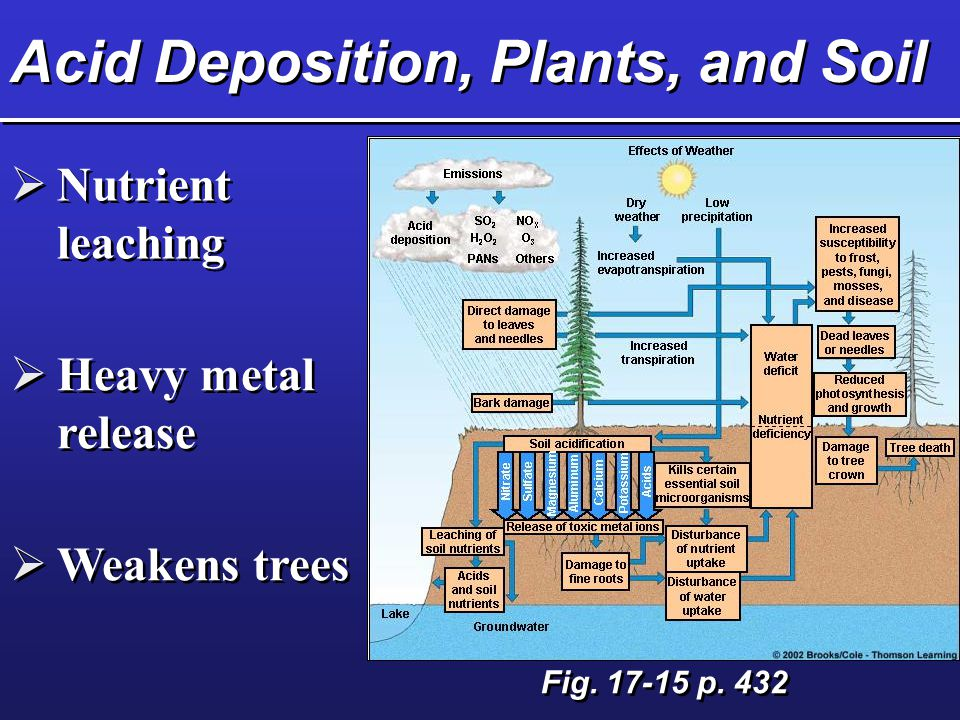 Acid Deposition, Plants, and Soil  Nutrient leaching  Heavy metal release  Weakens trees Fig.