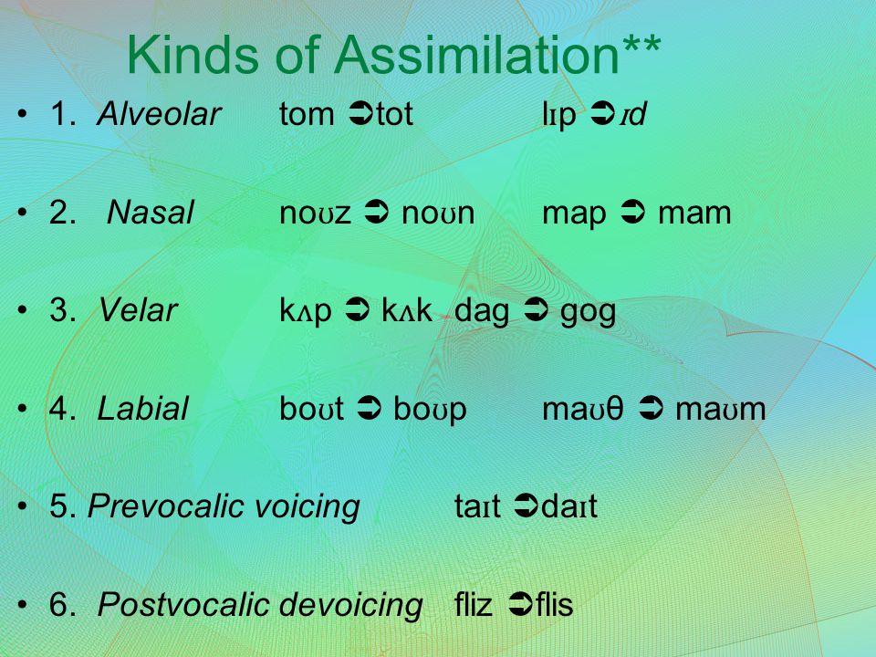 Kinds of Assimilation** 1. Alveolartom  totl ɪ p  ɪ d 2. Nasalno ʊ z  no ʊ nmap  mam 3. Velark ʌ p  k ʌ kdag  gog 4. Labialbo ʊ t  bo ʊ pma ʊ θ