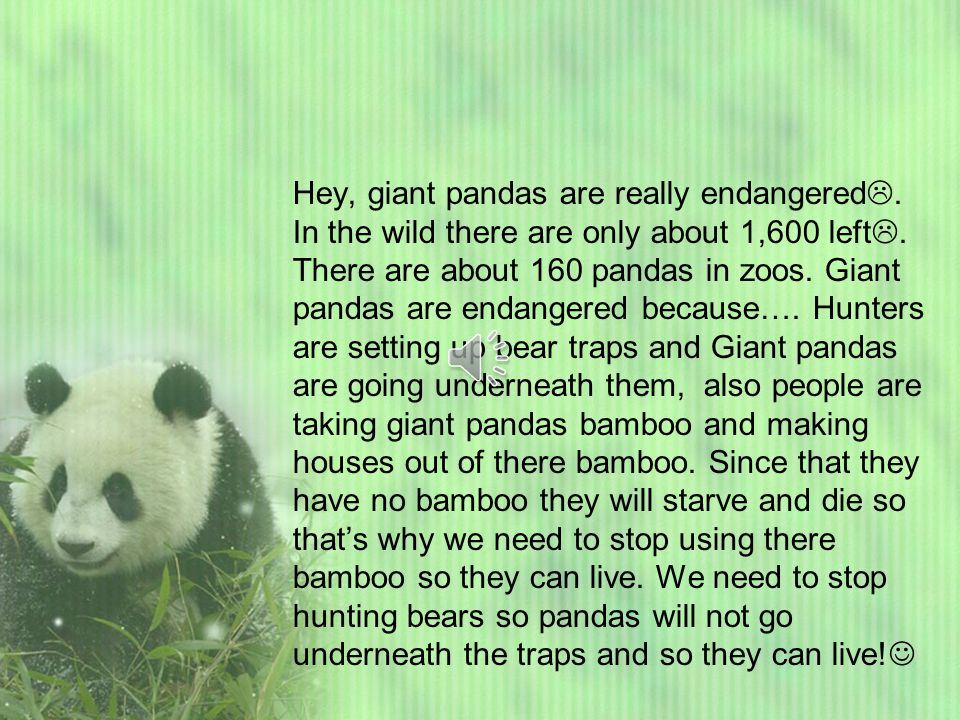 Welcome readers. Lets learn about giant pandas. Giant pandas generally live in China.