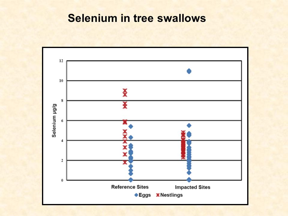 Selenium in tree swallows
