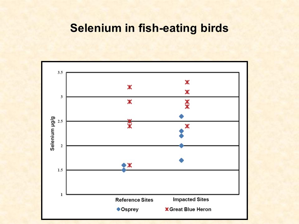 Selenium in fish-eating birds