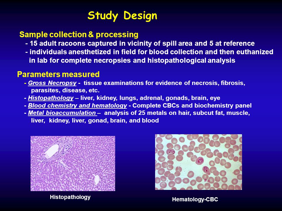 Study Design Parameters measured - Gross Necropsy - tissue examinations for evidence of necrosis, fibrosis, parasites, disease, etc.