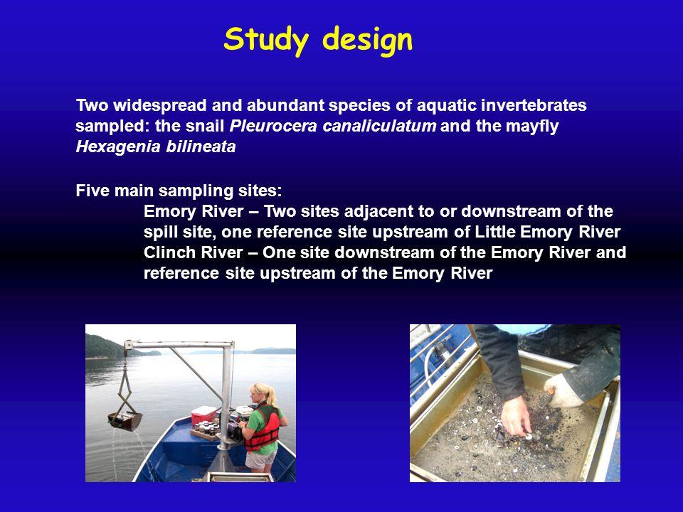 Study design Two widespread and abundant species of aquatic invertebrates sampled: the snail Pleurocera canaliculatum and the mayfly Hexagenia bilinea
