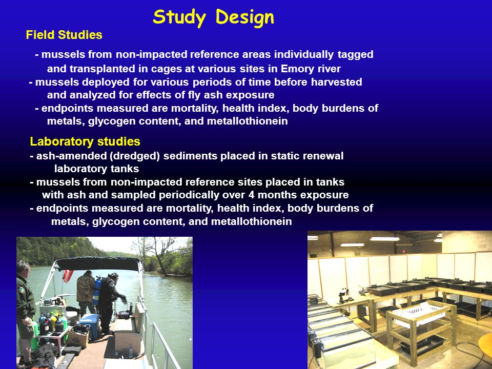 Study Design Field Studies - mussels from non-impacted reference areas individually tagged and transplanted in cages at various sites in Emory river -
