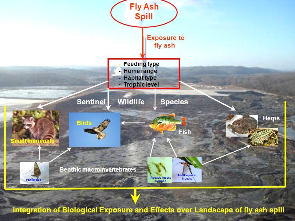 Integration of Ecological Studies