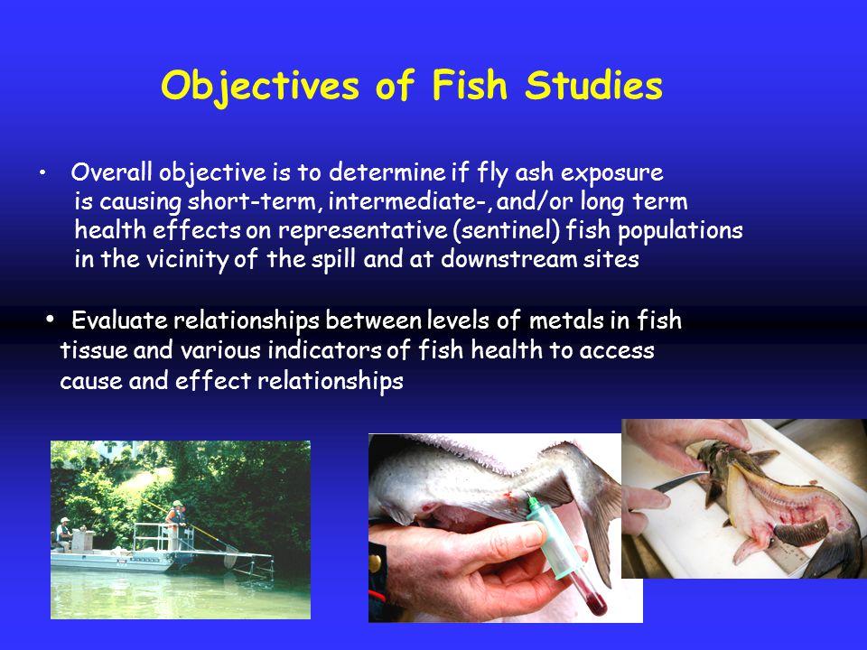 Selenium in fish-eating birds