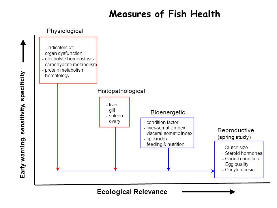 Ecological Relevance Early warning, sensitivity, specificity Physiological Histopathological Reproductive (spring study) - Clutch size - Steroid hormones - Gonad condition - Egg quality - Oocyte atresia Indicators of: - organ dysfunction - electrolyte homeostasis - carbohydrate metabolism - protein metabolism - hematology - liver - gill - spleen - ovary Bioenergetic - condition factor - liver-somatic index - visceral-somatic index - lipid index - feeding & nutrition Measures of Fish Health