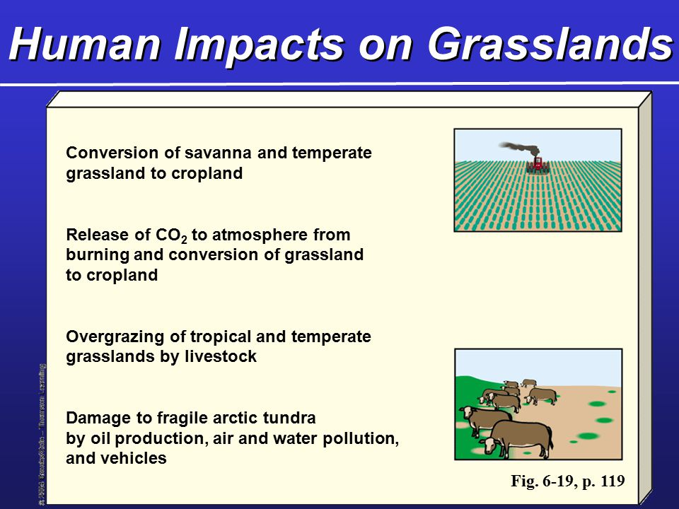 Human Impacts on Grasslands Conversion of savanna and temperate grassland to cropland Release of CO 2 to atmosphere from burning and conversion of grassland to cropland Overgrazing of tropical and temperate grasslands by livestock Damage to fragile arctic tundra by oil production, air and water pollution, and vehicles Fig.
