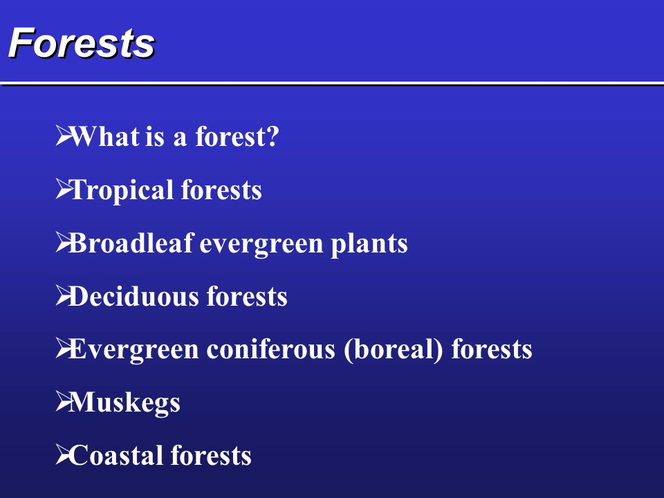 Forests  What is a forest.